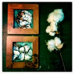 Pair of cotton bolls, each 4x4 pastel on card