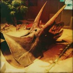 Triceratops, original photography