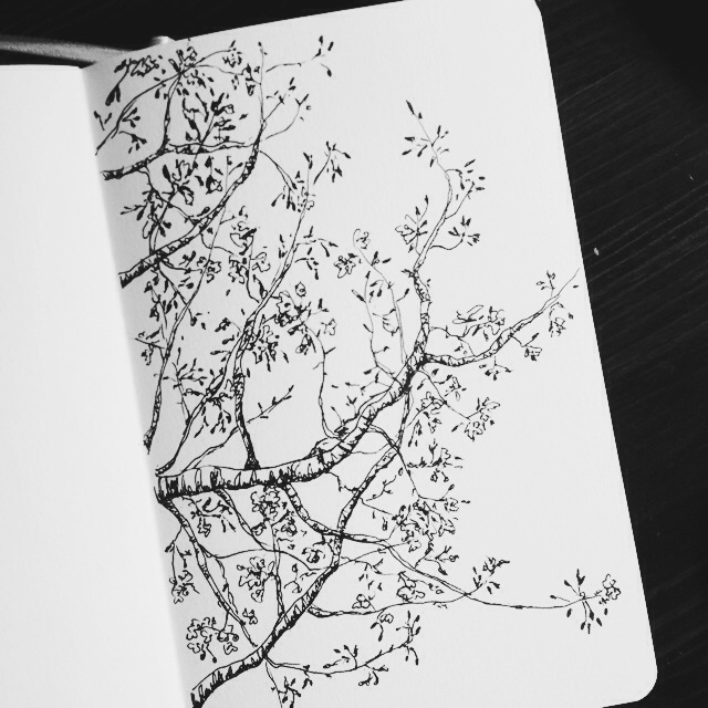 Cherry Blossoms, ink doodle