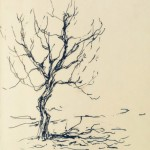 Little Crooked Tree, ink doodle