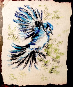 Blue Jay, pastel on handmade paper