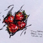 Strawberries, marker, colored pencil & ink doodle