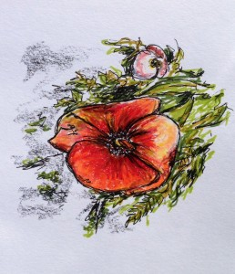 Poppies in Oxford: marker, colored pencil & ink doodle