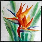 Chatty Birds of Paradise, watercolor