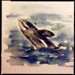 Gray whale breach, watercolor