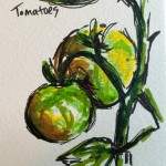 Tomatoes, ink & marker